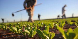 MIPAAF- DL Rilancio, art. 222 – Esonero Contributivo Imprese Agricole